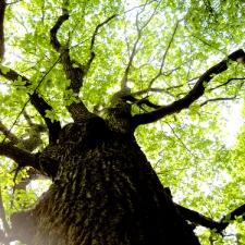 Hadleigh Great Woods, Essex